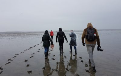 Wadlopen in weer en wind